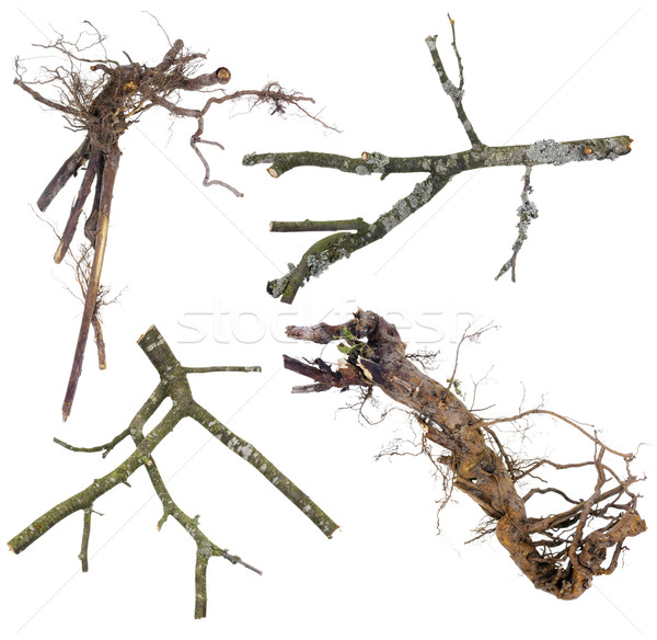Branches and roots  set  for Halloween Stock photo © vavlt