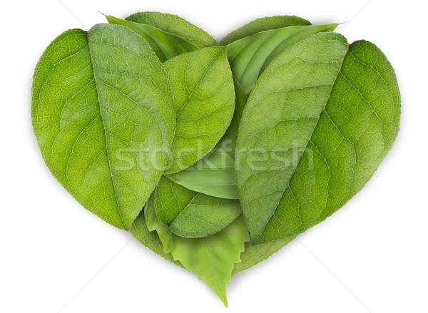 Groene bladeren hart groot groene bladeren collage Stockfoto © vavlt