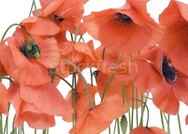 Red background Stock photo © vavlt