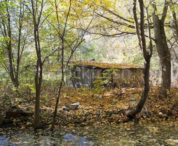 Hut of the jobless person in autumn wood Stock photo © vavlt