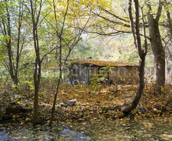 Kunyhó állásnélküli személy ősz fa szegény Stock fotó © vavlt