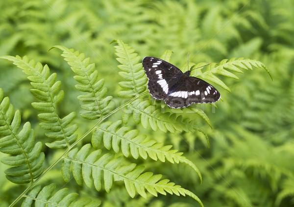蝶 シダ シート 黒 緑 選択フォーカス ストックフォト © vavlt