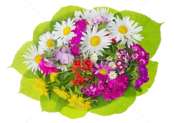 Sommer floral Medaillon Blumen Pflanzen isoliert Stock foto © vavlt