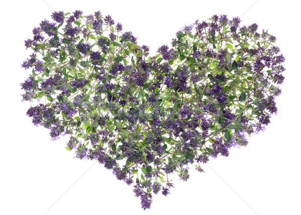 Oregano serca streszczenie lasu leczniczy przyprawy Zdjęcia stock © vavlt