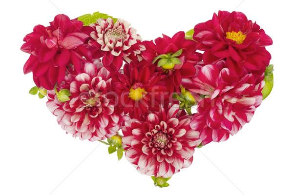 Sangrento floral coração isolado vermelho verão Foto stock © vavlt