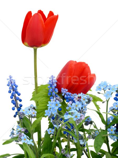 Sptings RGB colors Stock photo © vavlt