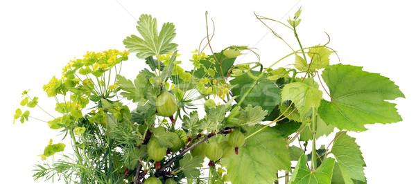 緑 混沌 孤立した 白 新鮮な ストックフォト © vavlt