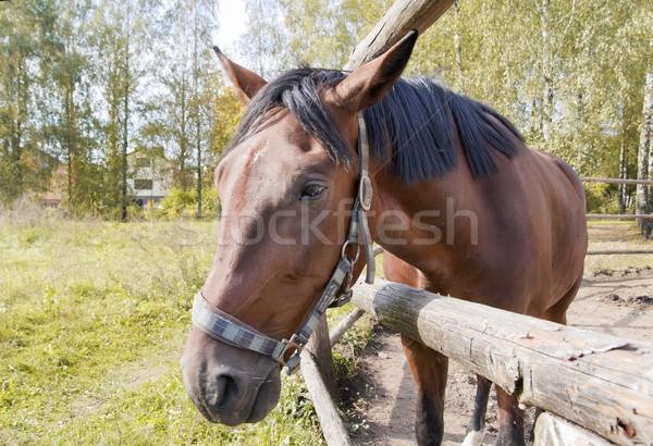 Portret triest paard najaar landschap Rood Stockfoto © vavlt