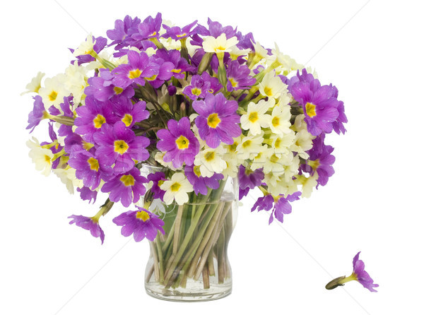 Sprigs  Primroses flowers in small glass Stock photo © vavlt