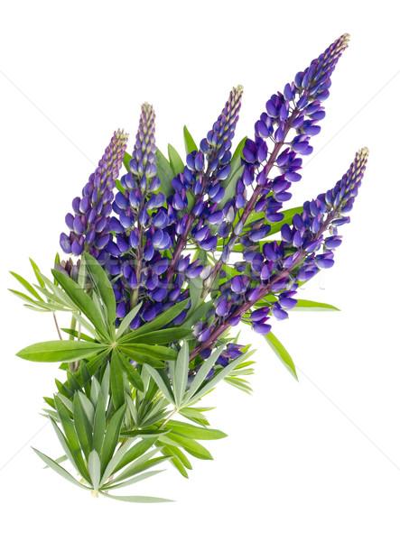 Flying blue flowers Stock photo © vavlt