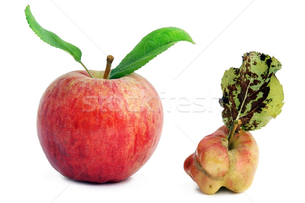 Healthy young and sick rotten apples Stock photo © vavlt