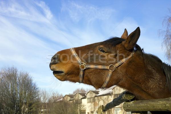 красный лошади синий зима небе Сток-фото © vavlt