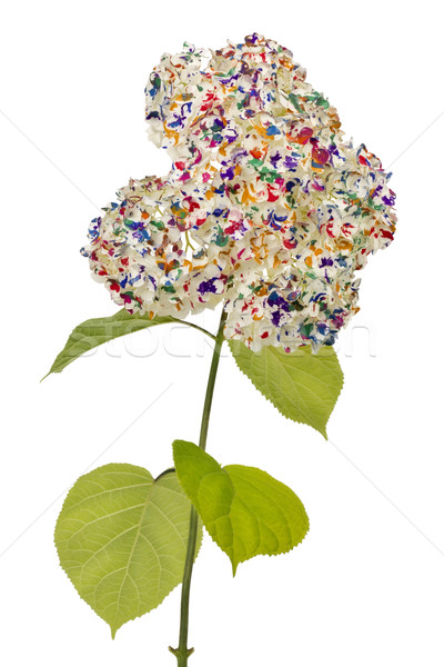 Floral psychedelic isolated Stock photo © vavlt