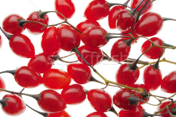 Vermelho venenoso isolado branco natureza Foto stock © vavlt