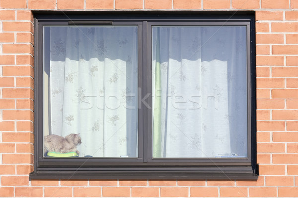 Stock photo: Brown plastic window and red  cat