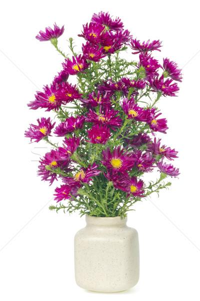 minimalistic  bouquet  - mini magenta chrysanthemums flowers  Stock photo © vavlt