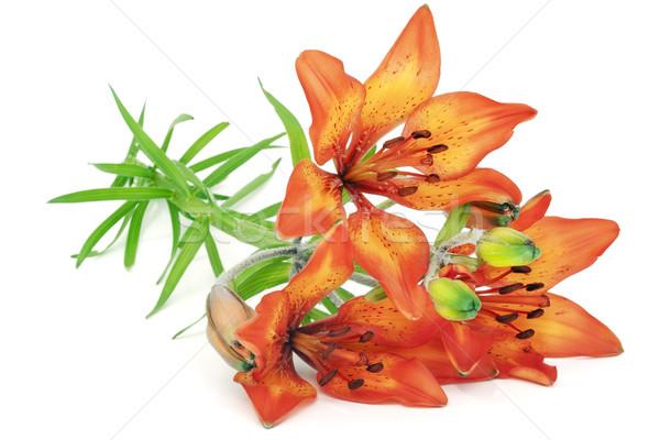 Orange  lilies to girlfriend Stock photo © vavlt