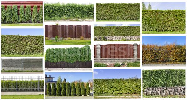 Zöld szett vidéki kerítés örökzöld növények Stock fotó © vavlt