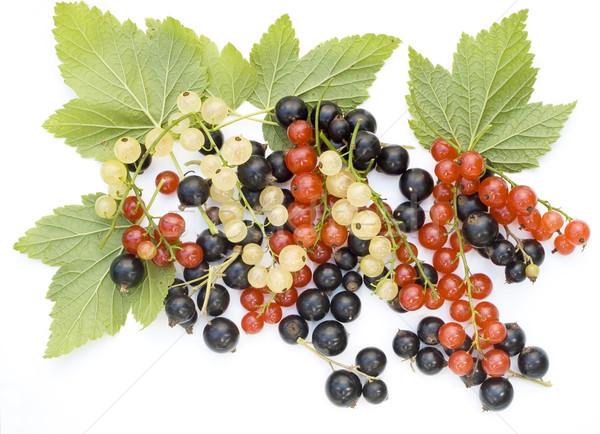 Foto d'archivio: Nero · rosso · bianco · ribes · frutti · di · bosco · isolato