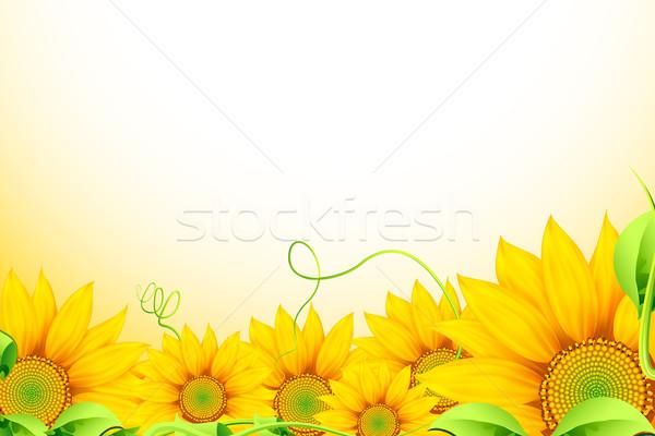 Girassol ilustração monte girassóis abstrato flor Foto stock © vectomart