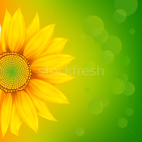 Luminoso girasole illustrazione abstract fiore primavera Foto d'archivio © vectomart