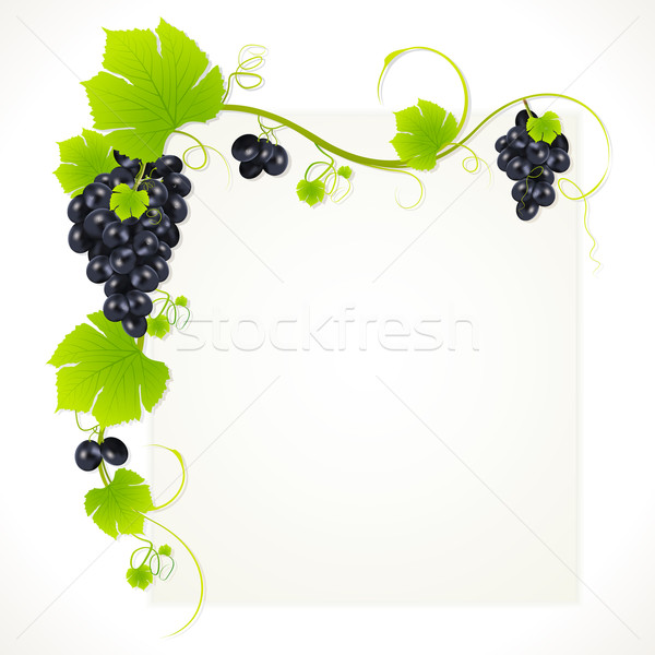 Raisins illustration raisins suspendu alimentaire Photo stock © vectomart