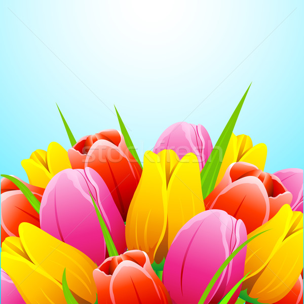 Colorful Tulip Flower Stock photo © vectomart