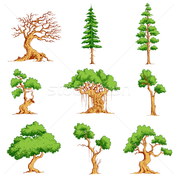 Vector Tree Set Stock photo © vectomart