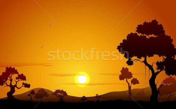 Sunset view of Jungle Stock photo © vectomart