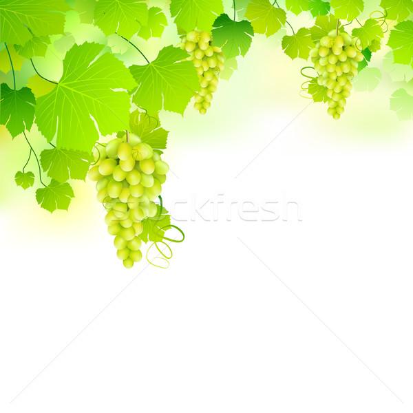 Grapes in Grapvine Stock photo © vectomart