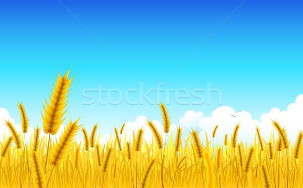 Stock fotó: Búza · farm · illusztráció · tájkép · arany · égbolt