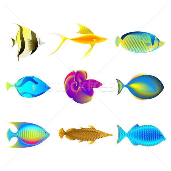 Stockfoto: Kleurrijk · illustratie · geïsoleerd · vis · zee