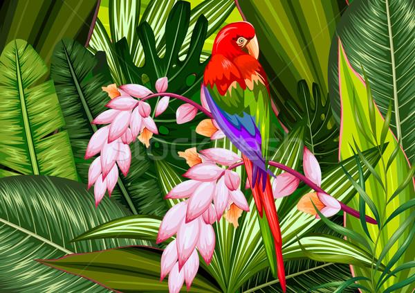Egzotyczny tropikalnych ilustracja kolorowy kwiat wiosną Zdjęcia stock © vectomart