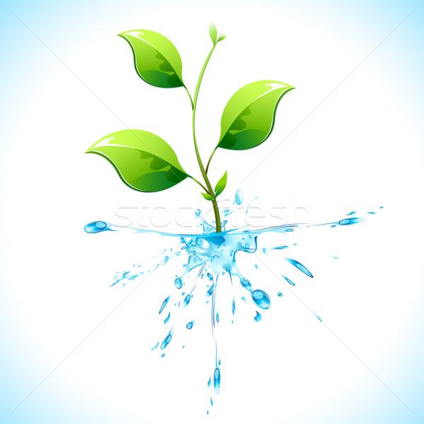 Watery Plant Stock photo © vectomart