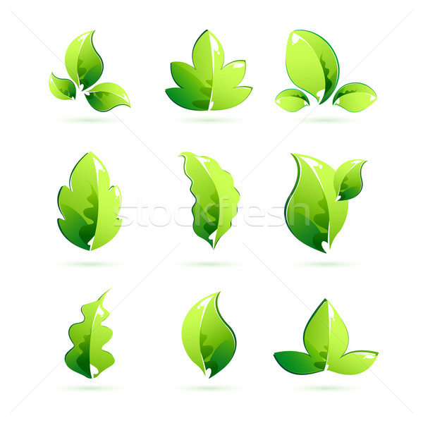 Different Leaves Stock photo © vectomart