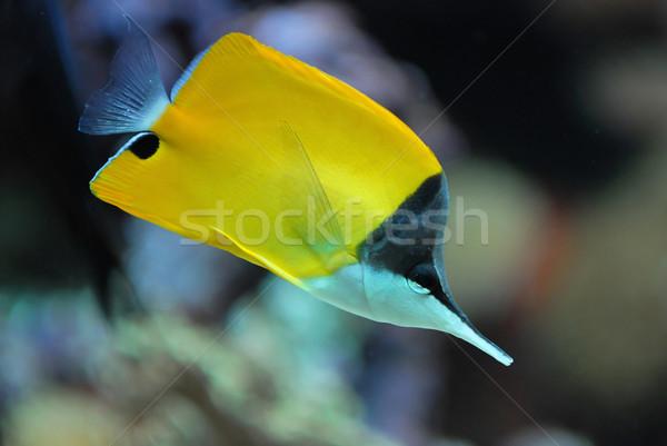 Korallzátony hal citromsárga elmosódott víz tenger Stock fotó © Vectorex