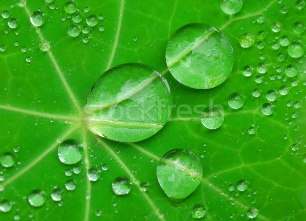 Gouttes d'eau vert usine forêt feuille jardin Photo stock © Vectorex