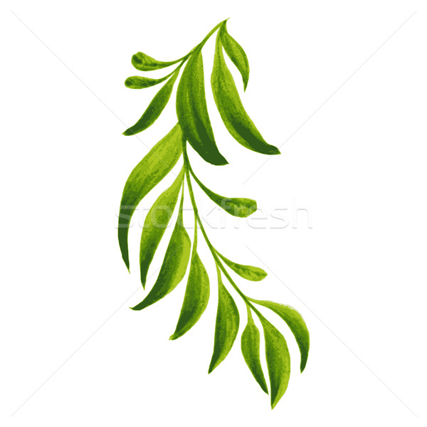 Decoratief ornament tak groene bladeren illustratie Stockfoto © VectorFlover