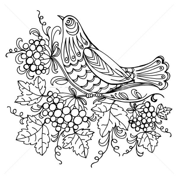Koekoek vector zwarte illustratie bloem Stockfoto © VectorFlover