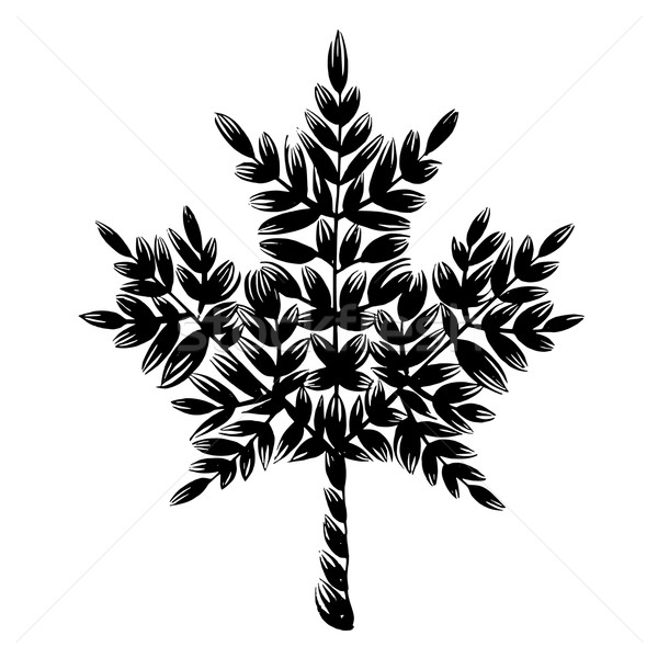 decorative silhouette maple leaf Stock photo © VectorFlover