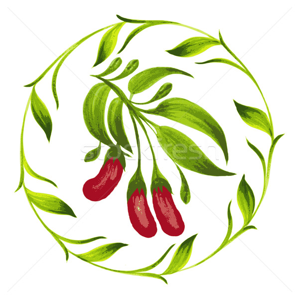 decorative ornament red berries Stock photo © VectorFlover