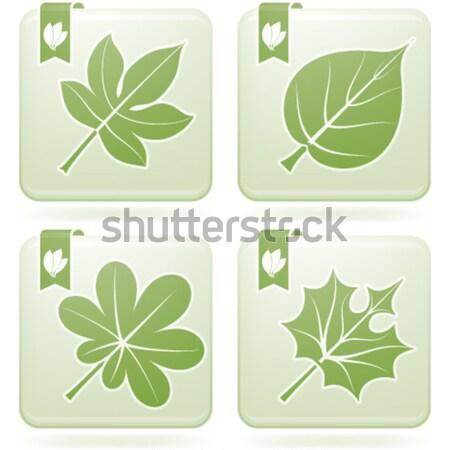 Autumn Leafs Stock photo © Vectorminator