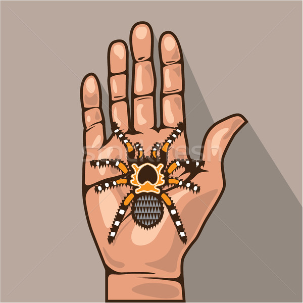 Open hand with a spider vector illustration Stock photo © vectorworks51