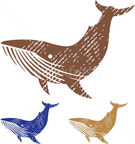 Grunge baleia ilustração imagem arquivo Foto stock © vectorworks51