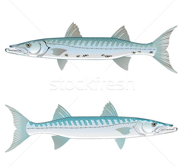 ベクトル 芸術 実例 現実的な 魚 肉 ストックフォト © vectorworks51