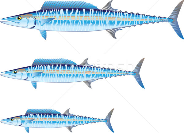 Wahoo game fish Vector illustration Stock photo © vectorworks51