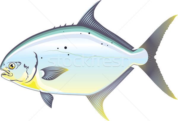 Pompano Florida fish vector illustration Stock photo © vectorworks51