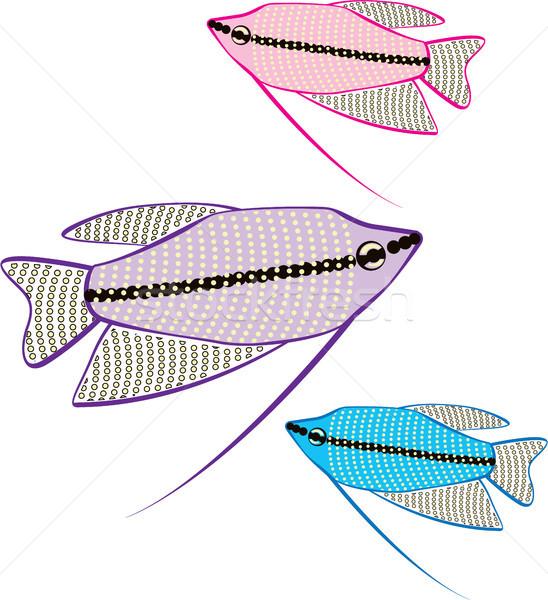 Gourami aquarium fish vector eps image Stock photo © vectorworks51