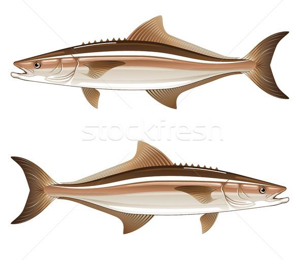Oyun balık et balık tutma tropikal hayvan Stok fotoğraf © vectorworks51