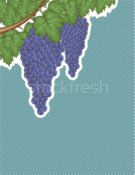 Grapes on a vine vector illustration clip-art image Stock photo © vectorworks51